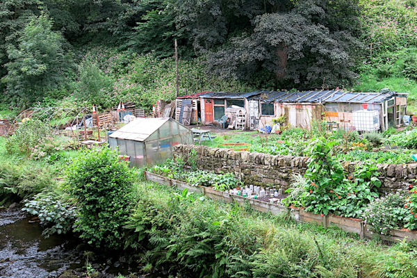 Allotments by Foster Bridge