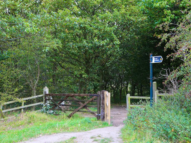 Enter the woodlands