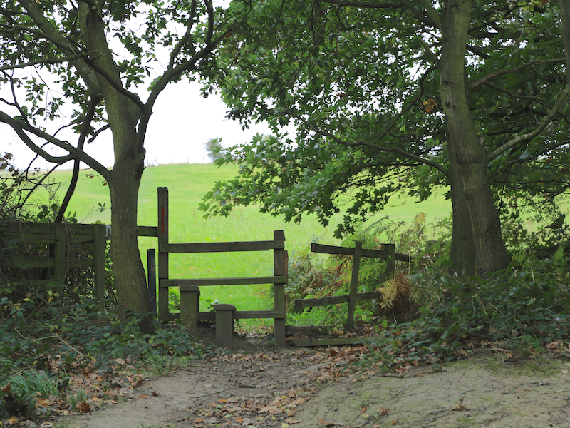 Stile out of woodland