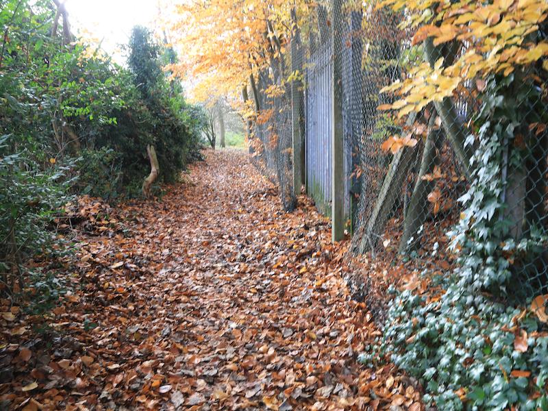 Path left