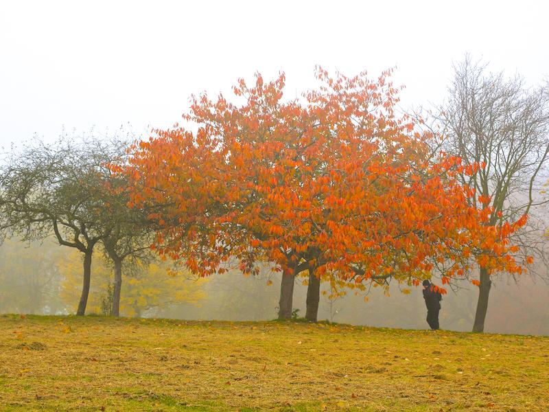 Autumn in Shibden Hall Park
